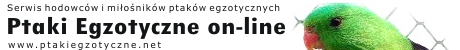 Ptaki Egzotyczne on-line